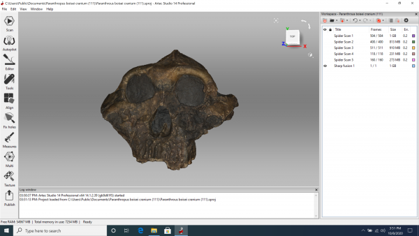 3D CAD model of a skull for virtual learning