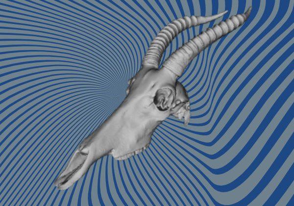 Antelope skull 3D scan