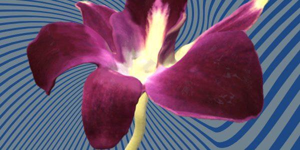 Flower 3D scan