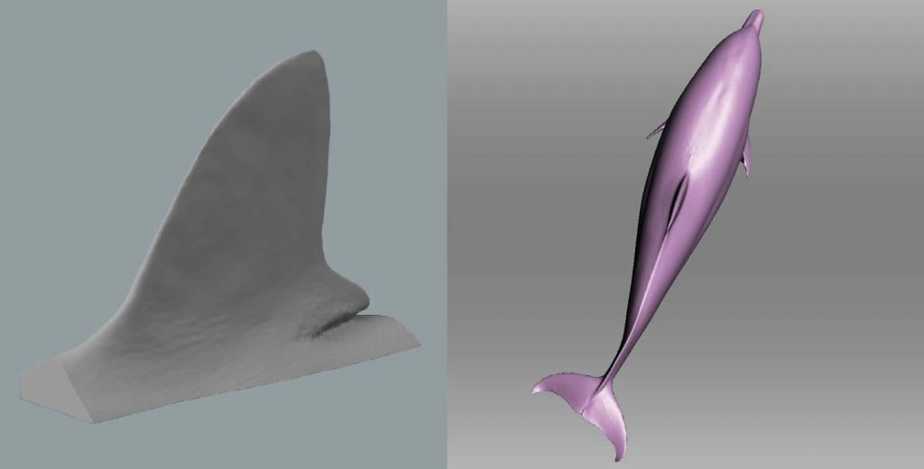 Scanned 3D animaux marins